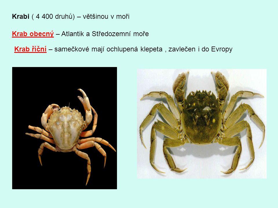 Krabi ( 4 400 druhů) – většinou v moři Krab obecný – Atlantik a Středozemní moře Krab říční – samečkové mají ochlupená klepeta, zavlečen i do Evropy