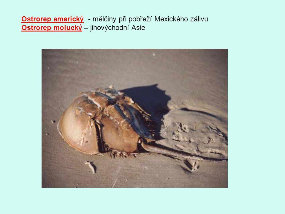 Skákavkovití -drobnější pestře zbarvené druhy, přepadají kořist skokem, výskyt v teplých oblastech Skákavka pruhovaná