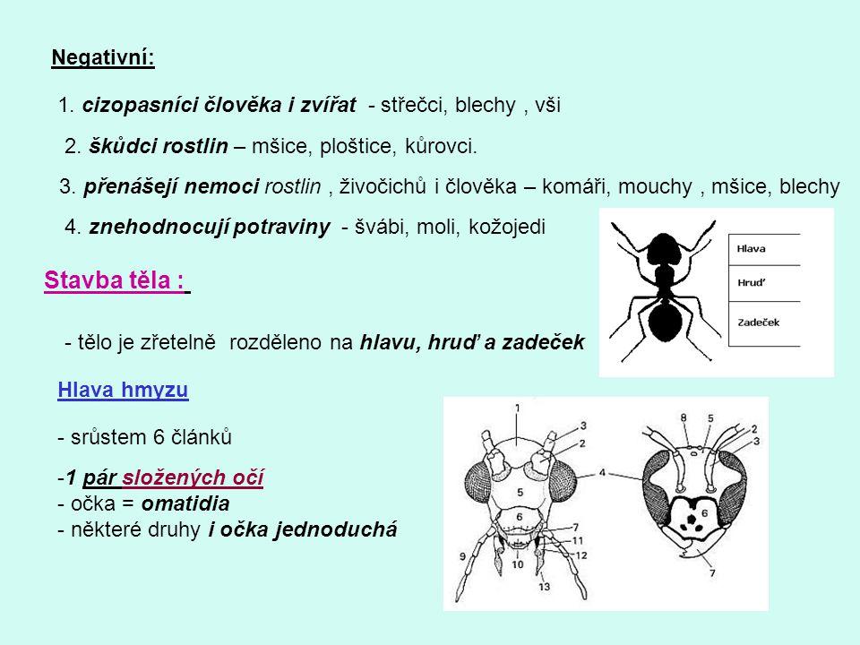 Negativní: 1. cizopasníci člověka i zvířat - střečci, blechy, vši 2. škůdci rostlin – mšice, ploštice, kůrovci. 3. přenášejí nemoci rostlin, živočichů