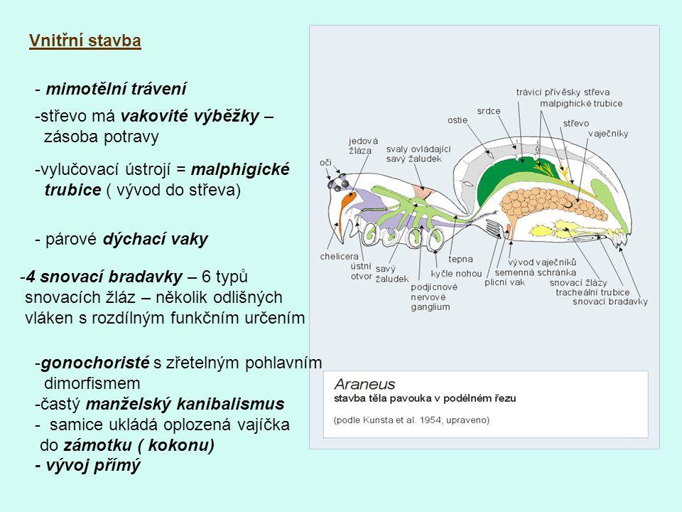 Vnitřní stavba - mimotělní trávení -střevo má vakovité výběžky – zásoba potravy -vylučovací ústrojí = malphigické trubice ( vývod do střeva) - párové