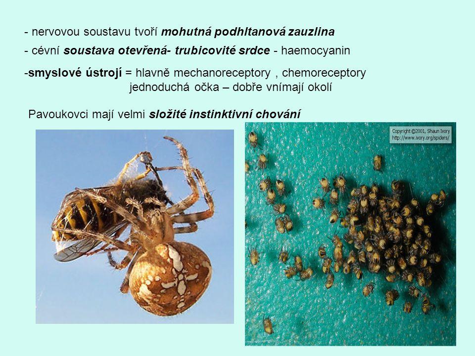 Korýši vyšší ( cca 14 tis, tvarově velmi rozmanitých druhů ) Rakovci -tělo kryto pevným krunýřem - složené z 21 článků ( 6 článků hlava, 8 článků hruď, 7 zadeček) - na zadečkových článcích vyvinuty končetiny Rak říční -tělo rozlišeno na hlavohruď a zadeček -krunýř je zpevněn vápenatými solemi - v předu vybíhá ve špičatý výběžek = rostrum -krunýř je během života mnohokrát svlékán – řízeno hormonálně -rakůvky ( vápencovitá tělíska) - doplnění vápníku při inkrustaci