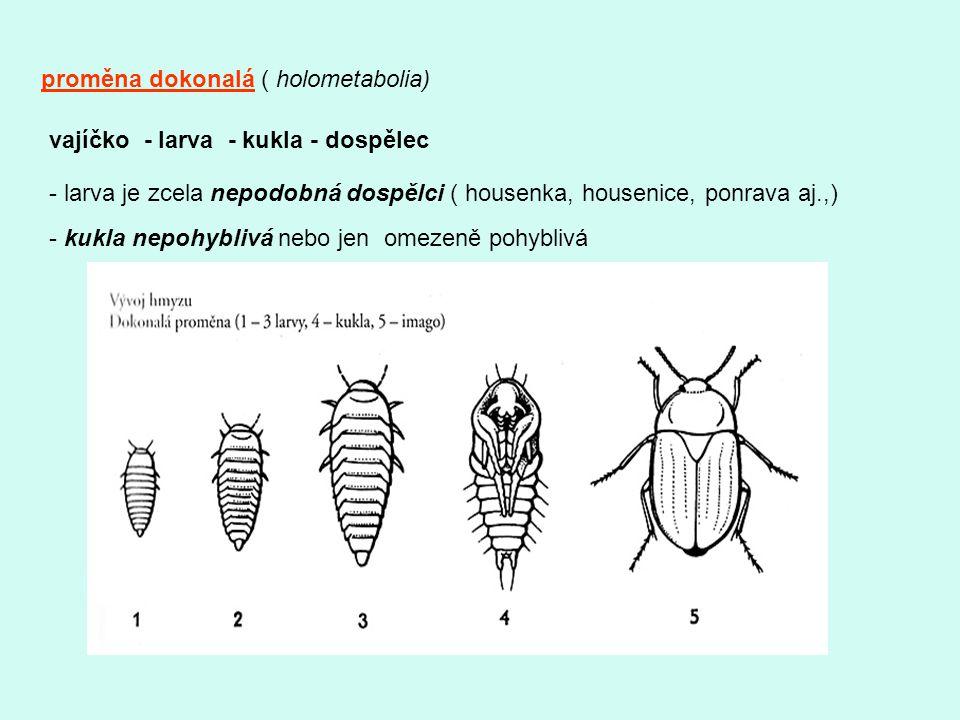 proměna dokonalá ( holometabolia) vajíčko - larva - kukla - dospělec - larva je zcela nepodobná dospělci ( housenka, housenice, ponrava aj.,) - kukla