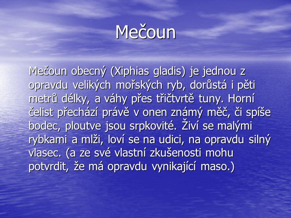 Mečoun Mečoun obecný (Xiphias gladis) je jednou z opravdu velikých mořských ryb, dorůstá i pěti metrů délky, a váhy přes třičtvrtě tuny. Horní čelist