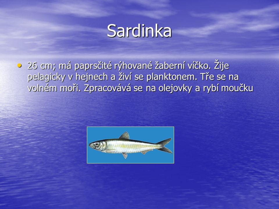 Sardinka 26 cm; má paprsčité rýhované žaberní víčko. Žije pelagicky v hejnech a živí se planktonem. Tře se na volném moři. Zpracovává se na olejovky a
