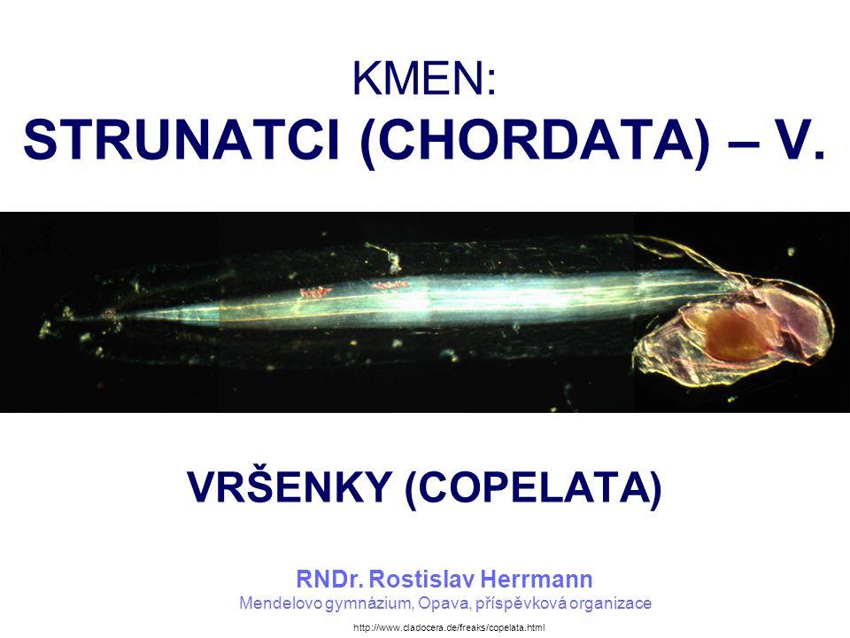 KMEN: STRUNATCI (CHORDATA) – V. VRŠENKY (COPELATA) RNDr. Rostislav Herrmann Mendelovo gymnázium, Opava, příspěvková organizace http://www.cladocera.de