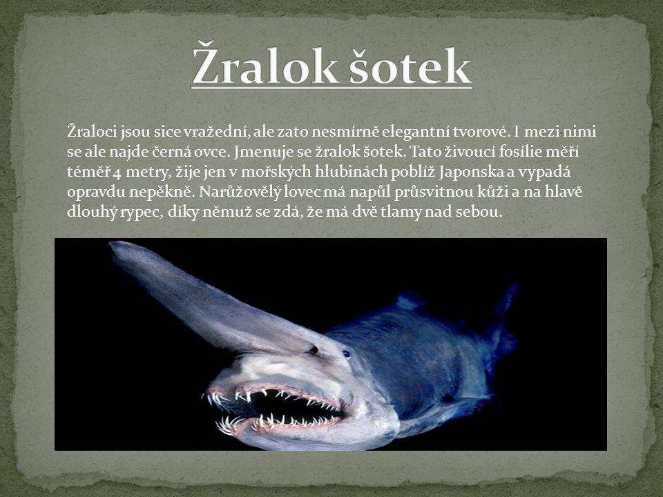 Žraloci jsou sice vražední, ale zato nesmírně elegantní tvorové.