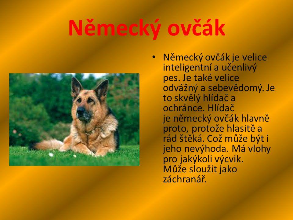 Německý ovčák Německý ovčák je velice inteligentní a učenlivý pes. Je také velice odvážný a sebevědomý. Je to skvělý hlídač a ochránce. Hlídač je něme