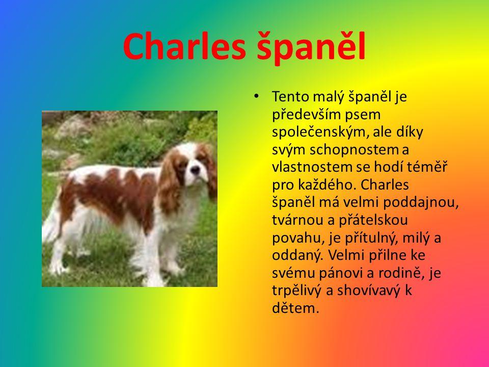 Charles španěl Tento malý španěl je především psem společenským, ale díky svým schopnostem a vlastnostem se hodí téměř pro každého. Charles španěl má