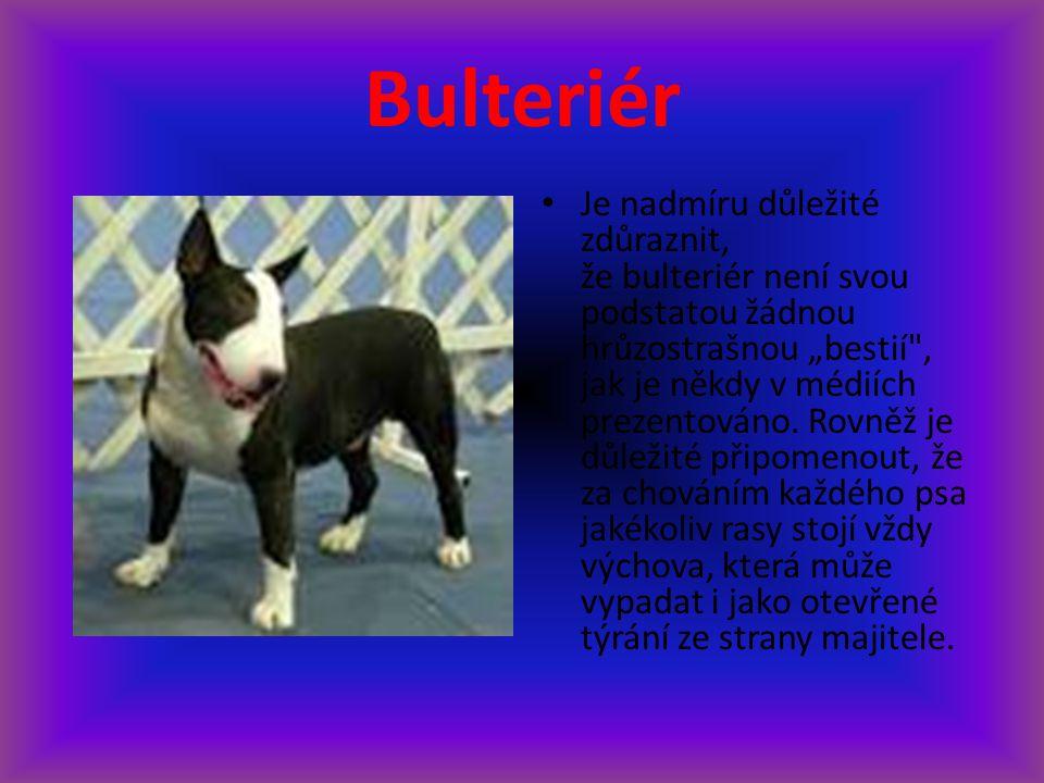 """Bulteriér Je nadmíru důležité zdůraznit, že bulteriér není svou podstatou žádnou hrůzostrašnou """"bestií"""