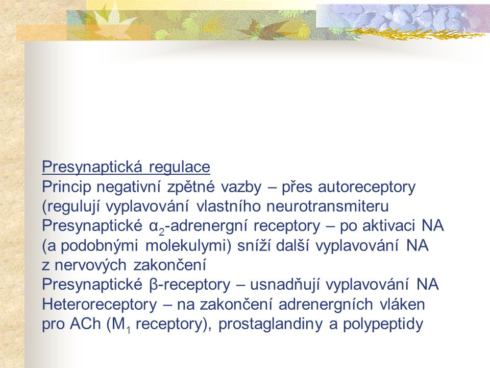 Presynaptická regulace Princip negativní zpětné vazby – přes autoreceptory (regulují vyplavování vlastního neurotransmiteru Presynaptické α 2 -adrener