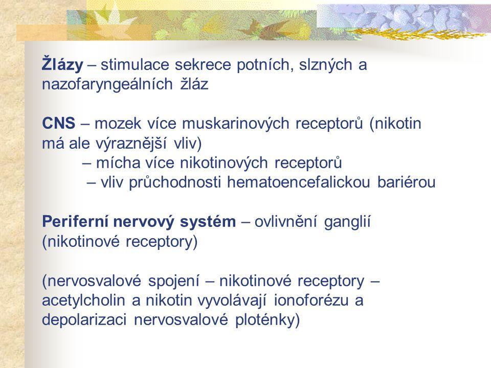 Žlázy – stimulace sekrece potních, slzných a nazofaryngeálních žláz CNS – mozek více muskarinových receptorů (nikotin má ale výraznější vliv) – mícha