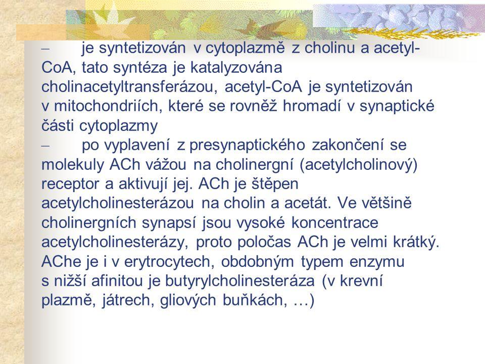 – je syntetizován v cytoplazmě z cholinu a acetyl- CoA, tato syntéza je katalyzována cholinacetyltransferázou, acetyl-CoA je syntetizován v mitochondr