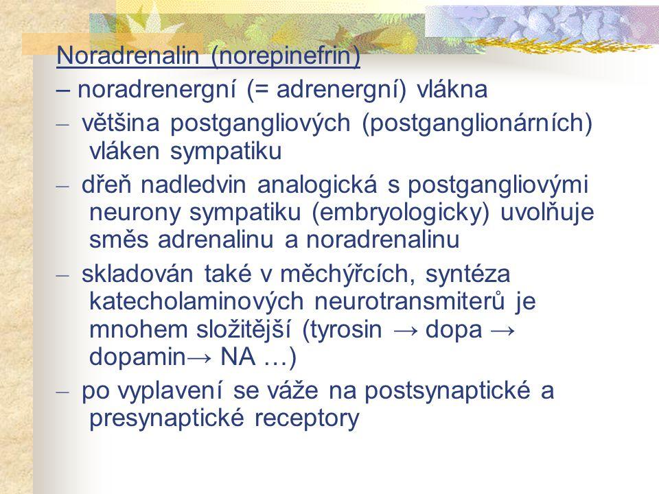 – uvolněný noradrenalin je zpět vychytáván do cytoplazmy nervové synapse, varikozity, na jeho degradaci se podílí monoaminooxidáza (v mitochondriích) – metabolická degradace není hlavním mechanismem ukončení účinku: difúze po koncentračním gradientu od receptorů (rozklad v plazmě nebo játrech), zpětné vychytávání (reuptake) do cytoplazmy nervového zakončení (uptake 1 ) nebo perisynptických gliových buněk nebo hladkosvalových buněk (uptake 2 )
