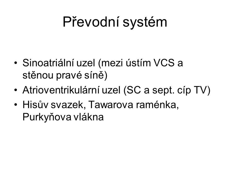 Převodní systém Sinoatriální uzel (mezi ústím VCS a stěnou pravé síně) Atrioventrikulární uzel (SC a sept. cíp TV) Hisův svazek, Tawarova raménka, Pur