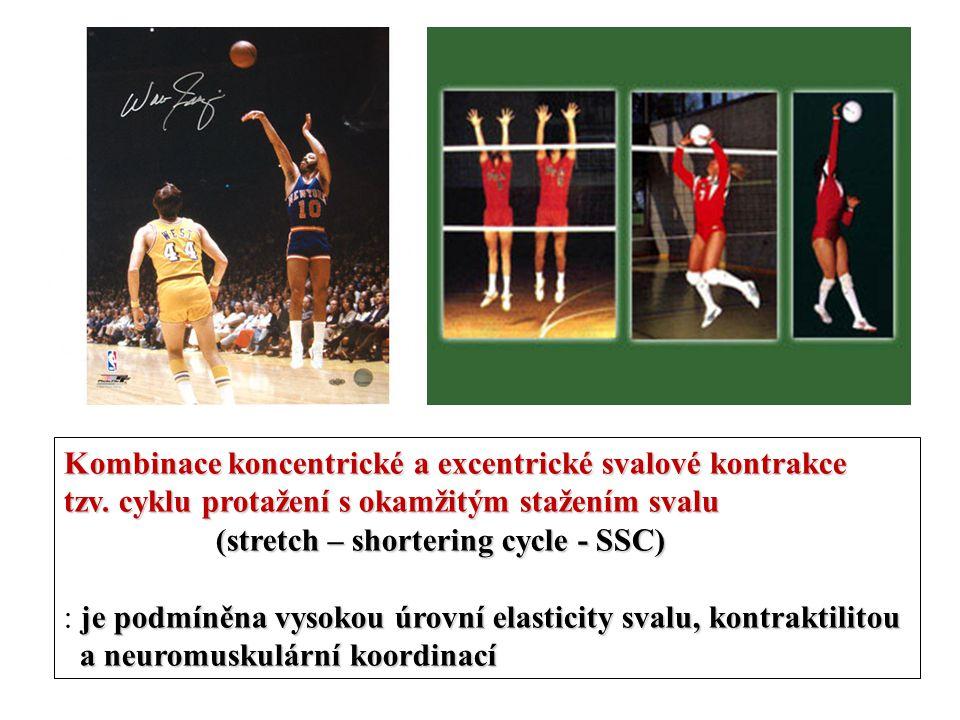 Kombinace koncentrické a excentrické svalové kontrakce tzv. cyklu protažení s okamžitým stažením svalu (stretch – shortering cycle - SSC) je podmíněna