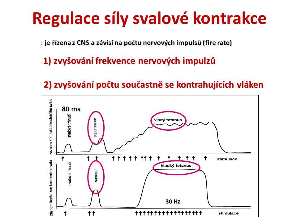 Regulace síly svalové kontrakce je řízena z CNS a závisí na počtu nervových impulsů (fire rate) : je řízena z CNS a závisí na počtu nervových impulsů