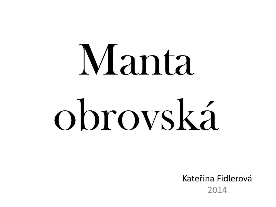 Manta obrovská Kateřina Fidlerová 2014