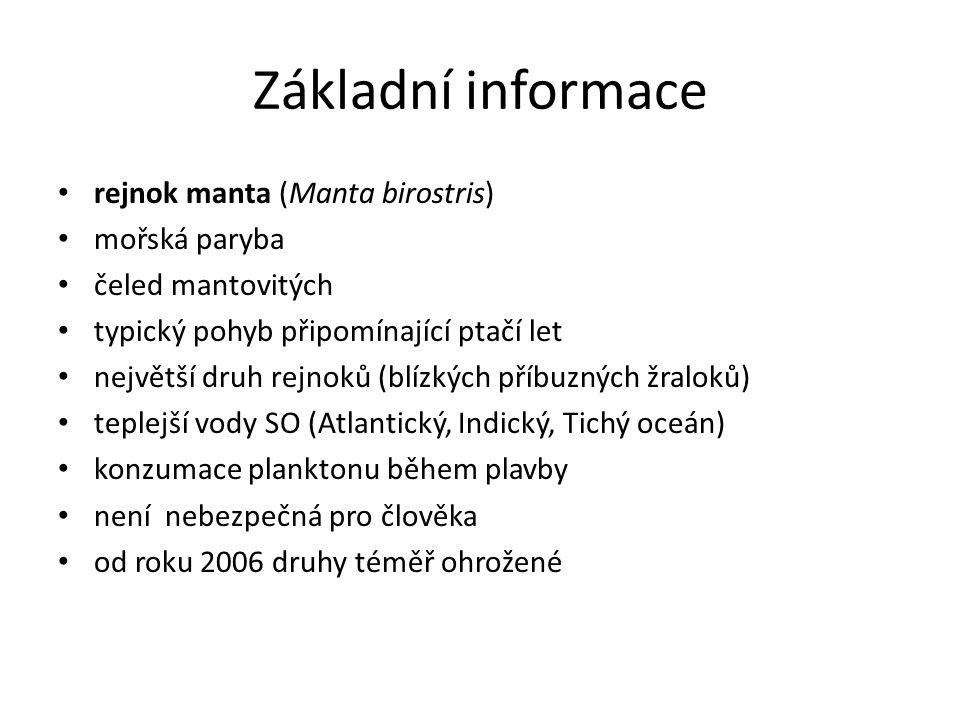 Základní informace rejnok manta (Manta birostris) mořská paryba čeled mantovitých typický pohyb připomínající ptačí let největší druh rejnoků (blízkýc
