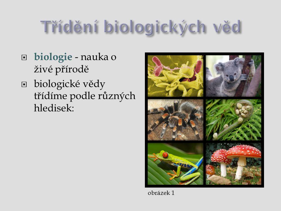  Mikrobiologie - nauka o mikroorganismech ( bakteriologie [bakterie], virologie [viry],)  Botanika - nauka o rostlinách ( algologie [řasy], lichenologie [lišejníky], bryologie [mechy], dendrologie [dřeviny], pomologie [ovocné stromy]…)  Mykologie - nauka o houbách  Zoologie - nauka o živočiších ( ichtyologie [ryby], entomologie [hmyz], protozoologie [prvoci], kynologie [psi], herpetologie [plazi]…)  Antropologie - nauka o člověku  Hydrobiologie - nauka o vodních organismech  Pedologie - nauka o půdě