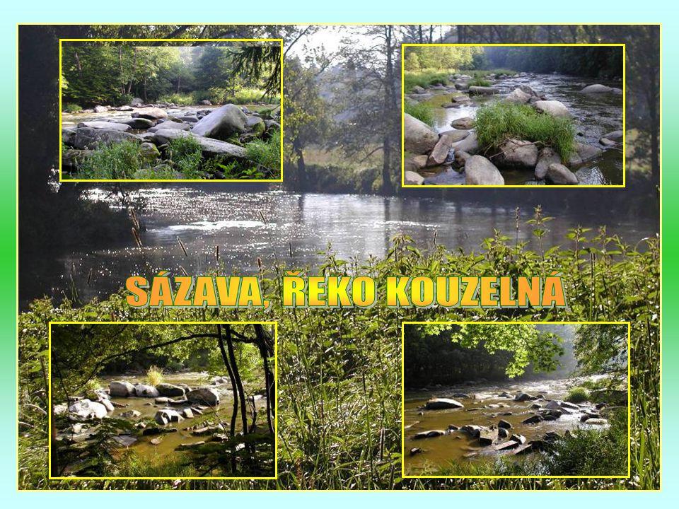 Začínající podzim na řece Sázavě