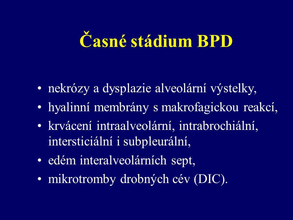 Časné stádium BPD nekrózy a dysplazie alveolární výstelky, hyalinní membrány s makrofagickou reakcí, krvácení intraalveolární, intrabrochiální, intersticiální i subpleurální, edém interalveolárních sept, mikrotromby drobných cév (DIC).