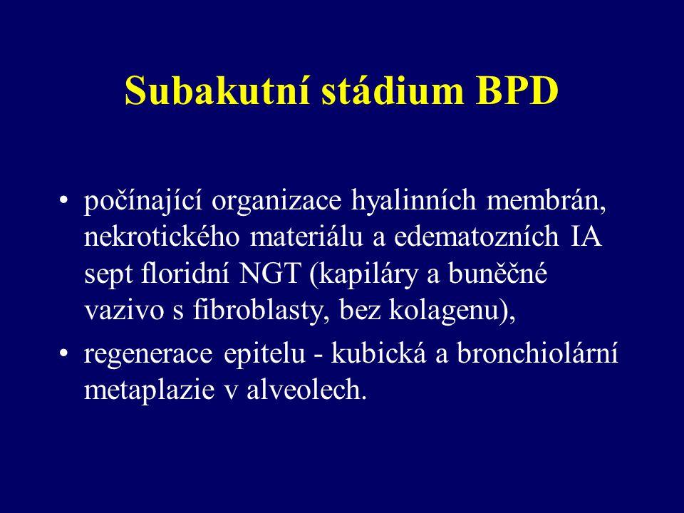 Subakutní stádium BPD počínající organizace hyalinních membrán, nekrotického materiálu a edematozních IA sept floridní NGT (kapiláry a buněčné vazivo s fibroblasty, bez kolagenu), regenerace epitelu - kubická a bronchiolární metaplazie v alveolech.