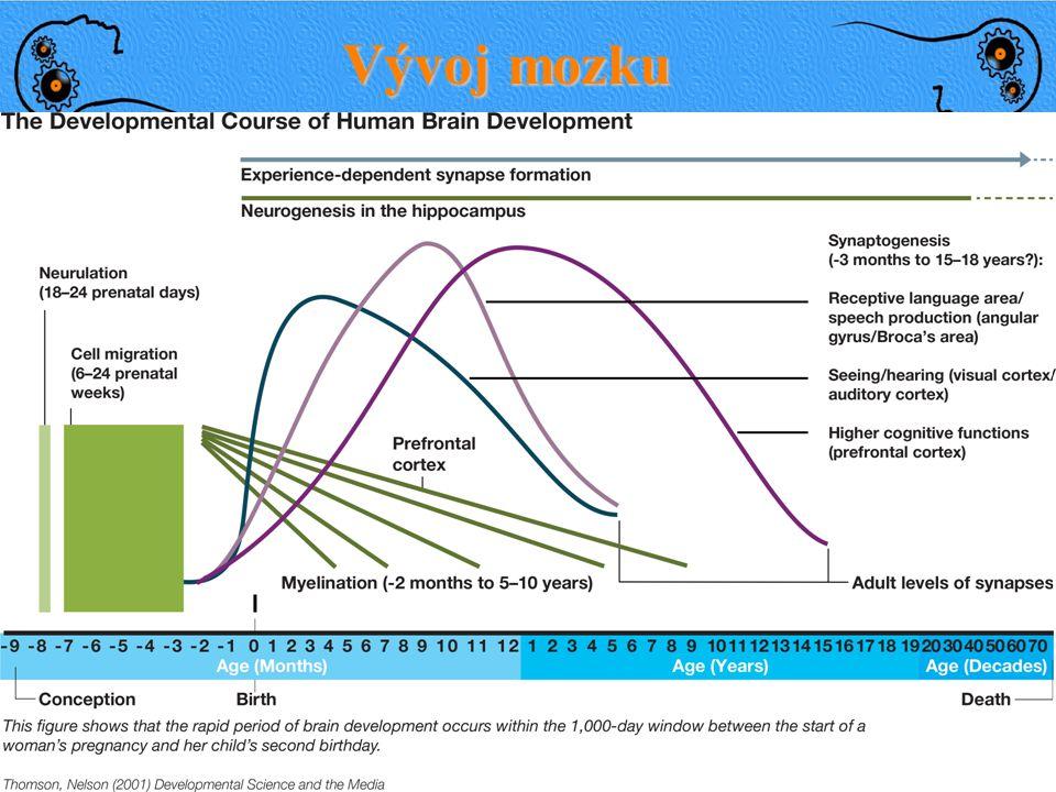 PrenatalNovorozenec3 roky 1 mld neuronů 25% váhy dospělého Vývoj mozku 250,000 neuronů/min 75% váhy dospělého (myelin) ● Kojení ● Pláč ● Chování http: