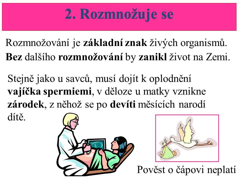 2.Rozmnožuje se Rozmnožování je základní znak živých organismů.