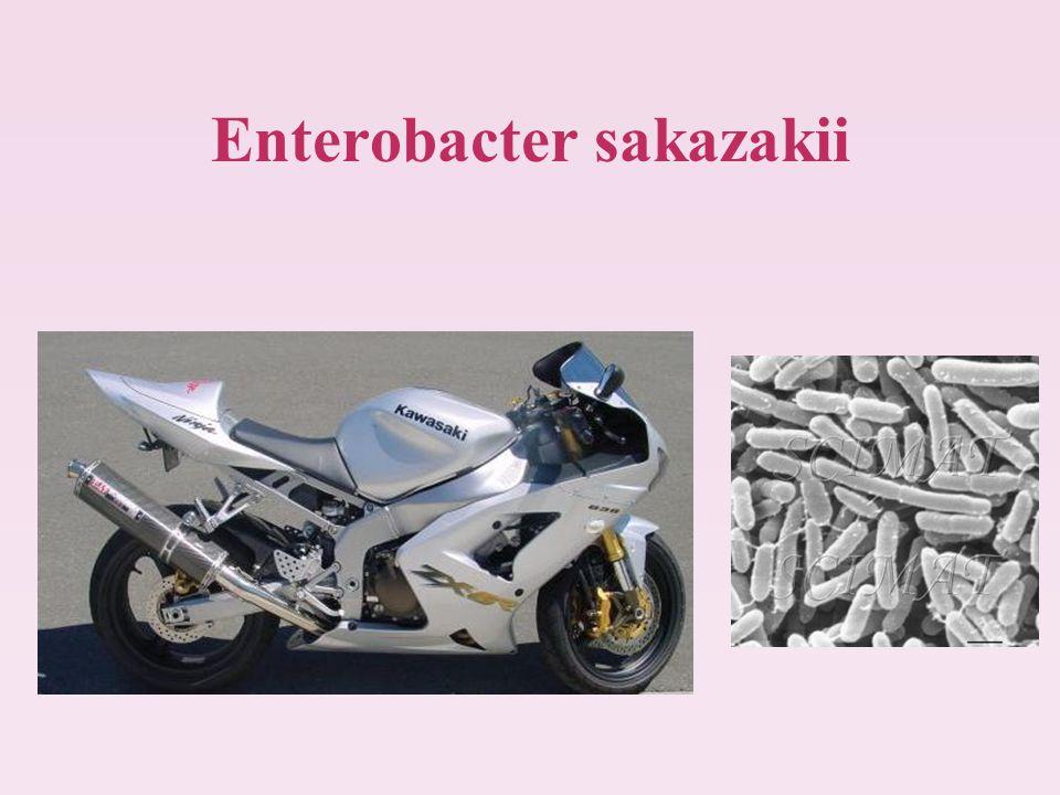 Enterobacter sakazakii