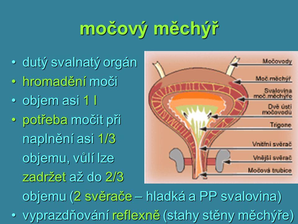 močový měchýř dutý svalnatý orgándutý svalnatý orgán hromadění močihromadění moči objem asi 1 lobjem asi 1 l potřeba močit připotřeba močit při naplně