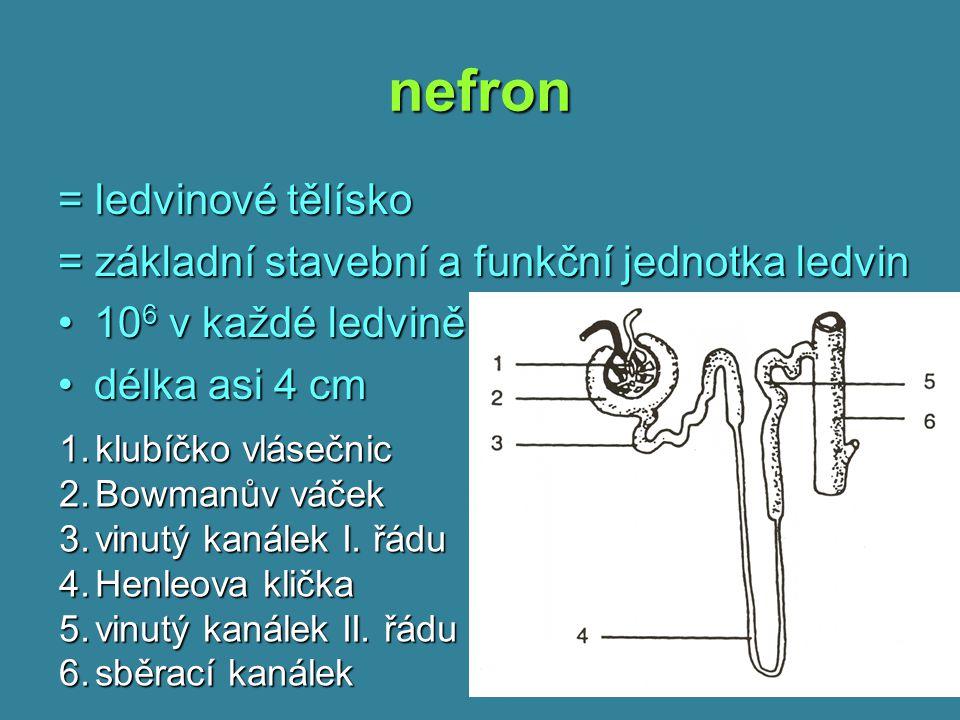 nefron = ledvinové tělísko = základní stavební a funkční jednotka ledvin 10 6 v každé ledvině10 6 v každé ledvině délka asi 4 cmdélka asi 4 cm 1.klubí