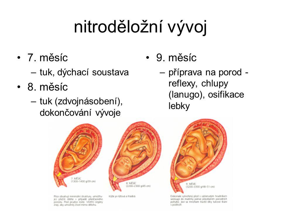 nitroděložní vývoj 7. měsíc –tuk, dýchací soustava 8. měsíc –tuk (zdvojnásobení), dokončování vývoje 9. měsíc –příprava na porod - reflexy, chlupy (la