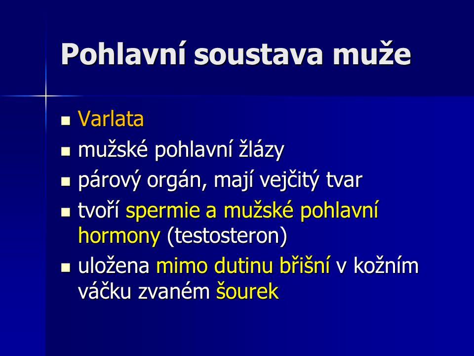 Varlata Varlata mužské pohlavní žlázy mužské pohlavní žlázy párový orgán, mají vejčitý tvar párový orgán, mají vejčitý tvar tvoří spermie a mužské poh