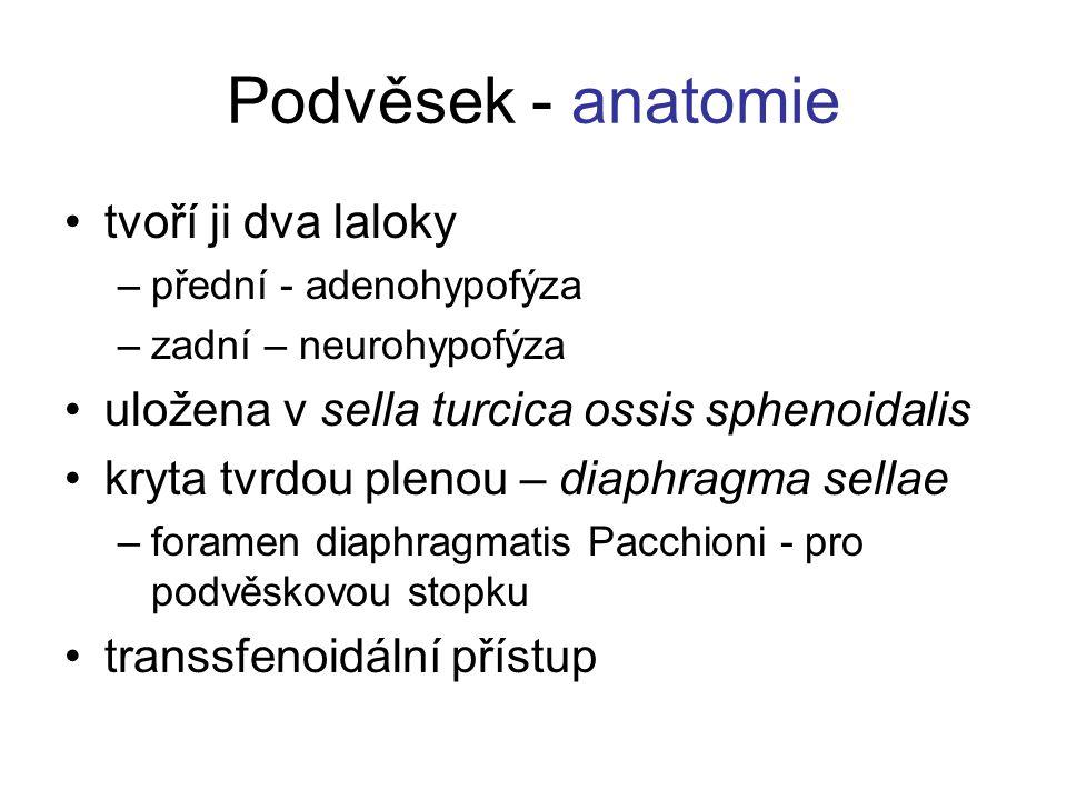 Podvěsek - anatomie tvoří ji dva laloky –přední - adenohypofýza –zadní – neurohypofýza uložena v sella turcica ossis sphenoidalis kryta tvrdou plenou
