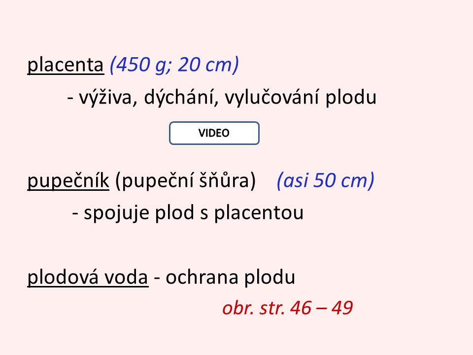 placenta (450 g; 20 cm) - výživa, dýchání, vylučování plodu pupečník (pupeční šňůra) (asi 50 cm) - spojuje plod s placentou plodová voda - ochrana plodu obr.