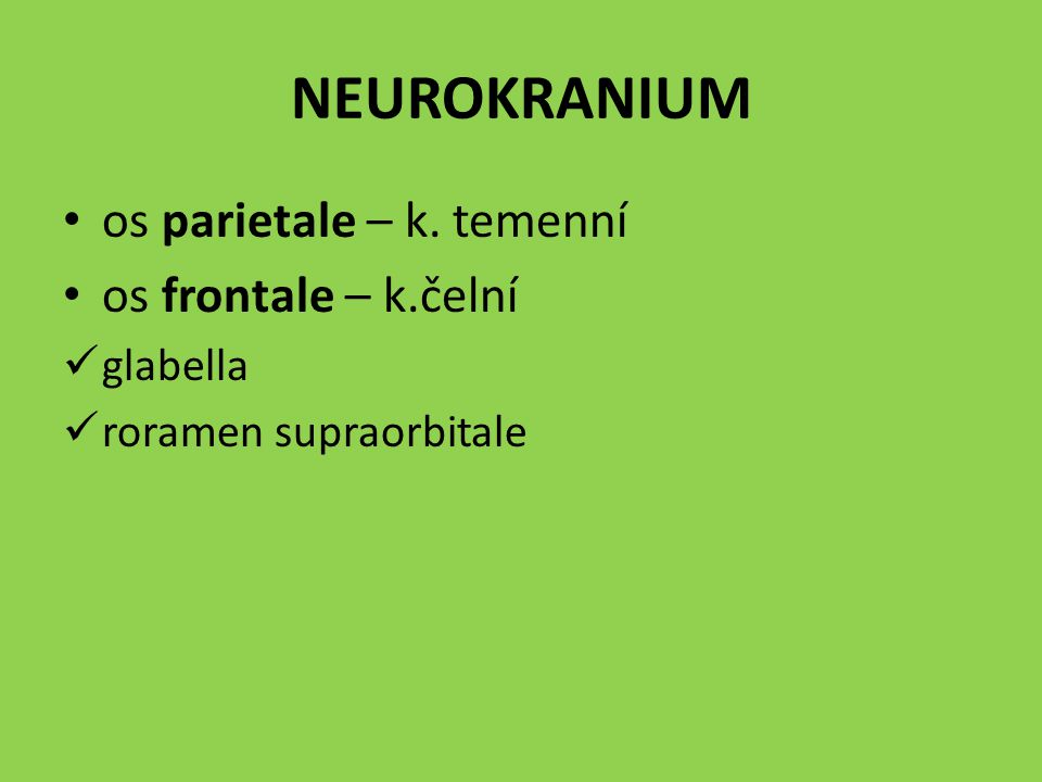 NEUROKRANIUM os parietale – k. temenní os frontale – k.čelní glabella roramen supraorbitale