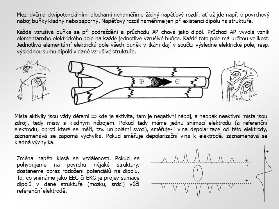 Normální EEG pozadí u kojenců (2-12 měsíců) - delta a theta vlny zhruba stejně nápadné, delta na 1-3 Hz, netlumí se otevřením očí - tracé alternant mizí kolem 1., někdy 2.