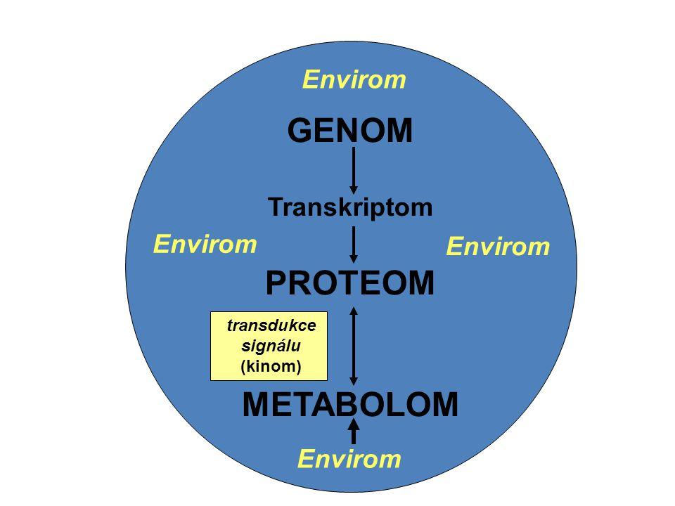 GENOM Transkriptom Kinom PROTEOM METABOLOM GENOM Transkriptom PROTEOM METABOLOM transdukce signálu (kinom) Envirom