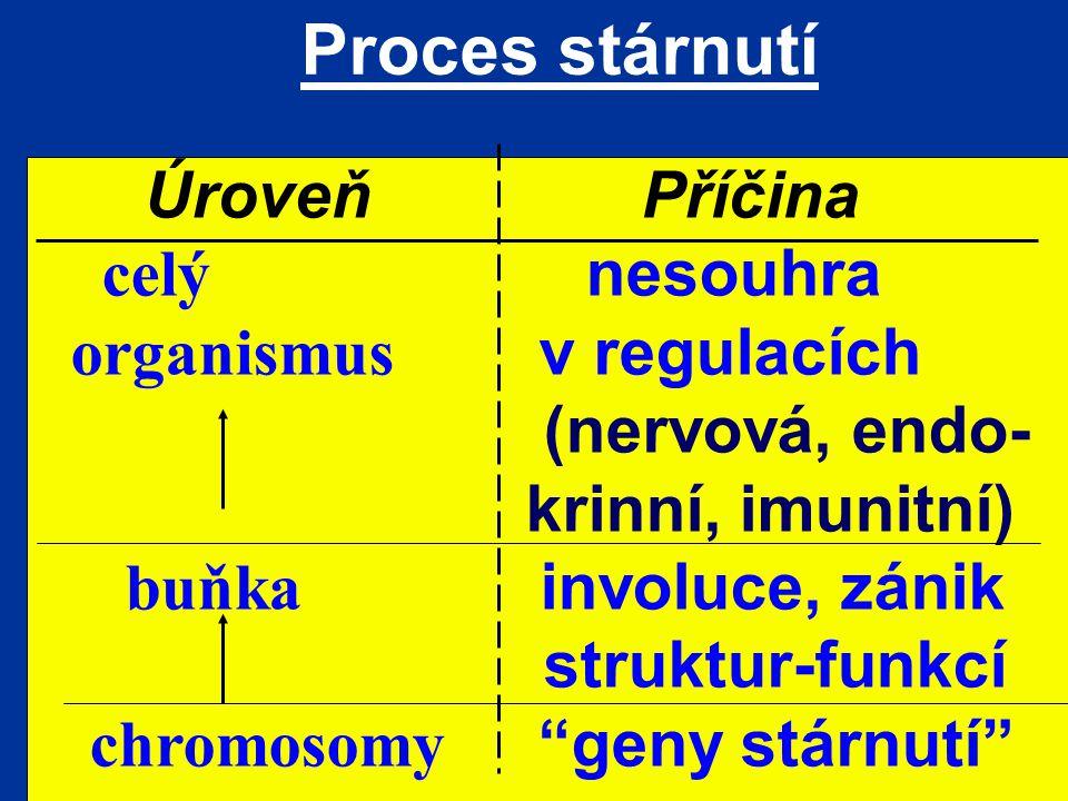 Proces stárnutí Úroveň Příčina celý nesouhra organismus v regulacích (nervová, endo- krinní, imunitní) buňka involuce, zánik struktur-funkcí chromosom