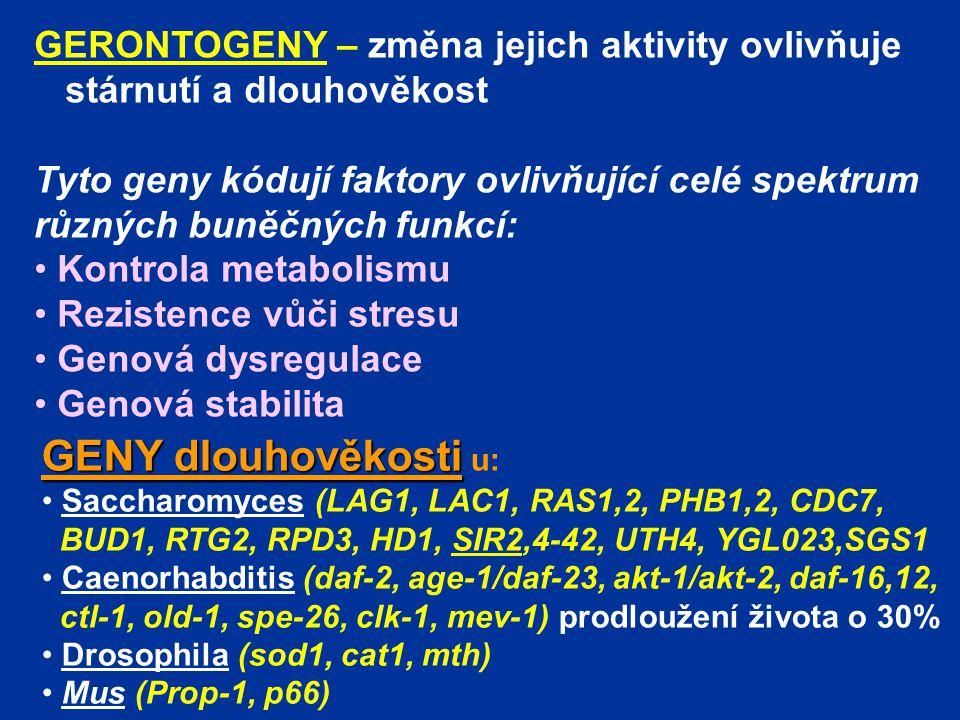 GERONTOGENY – změna jejich aktivity ovlivňuje stárnutí a dlouhověkost Tyto geny kódují faktory ovlivňující celé spektrum různých buněčných funkcí: Kon