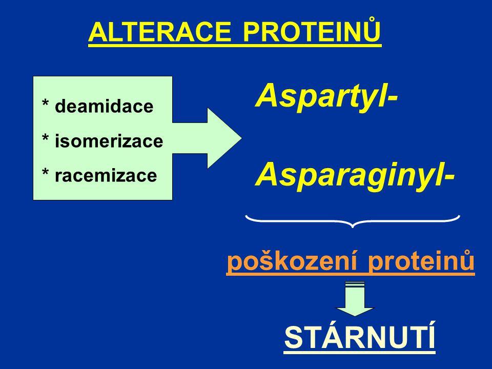 ALTERACE PROTEINŮ Aspartyl- Asparaginyl- * deamidace * isomerizace * racemizace poškození proteinů STÁRNUTÍ