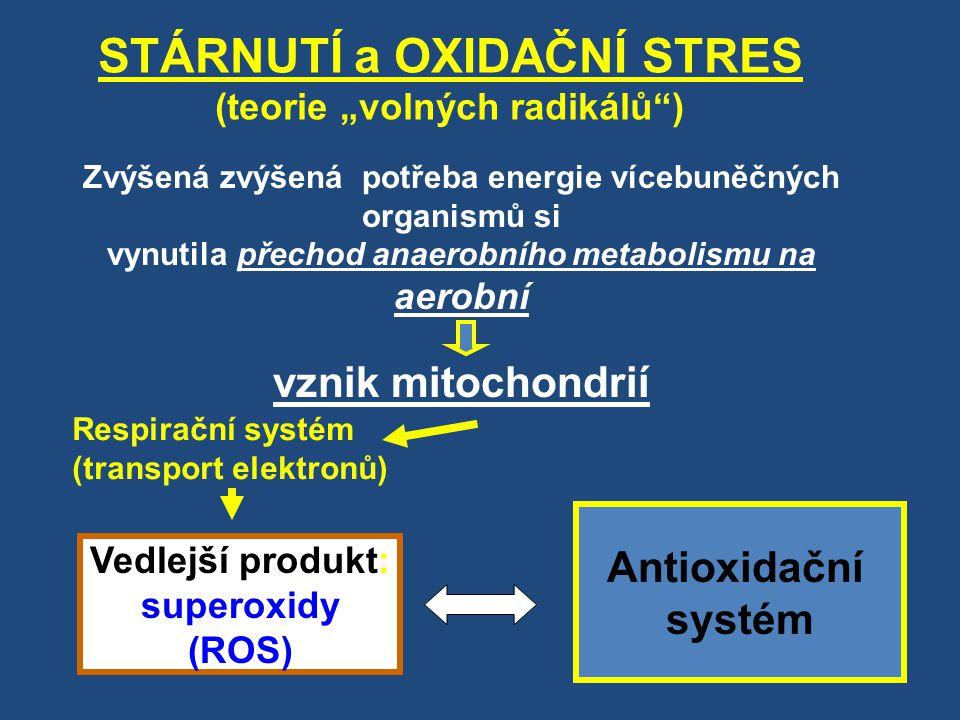 """STÁRNUTÍ a OXIDAČNÍ STRES (teorie """"volných radikálů"""") Zvýšená zvýšená potřeba energie vícebuněčných organismů si vynutila přechod anaerobního metaboli"""