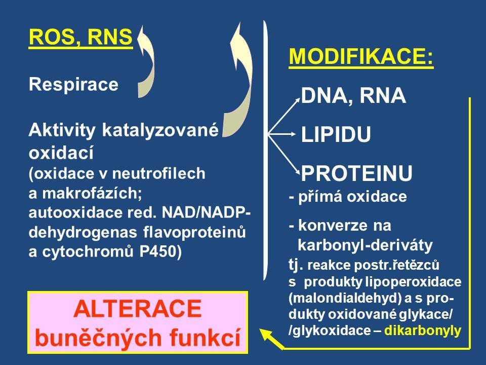 ROS, RNS Respirace Aktivity katalyzované oxidací (oxidace v neutrofilech a makrofázích; autooxidace red. NAD/NADP- dehydrogenas flavoproteinů a cytoch