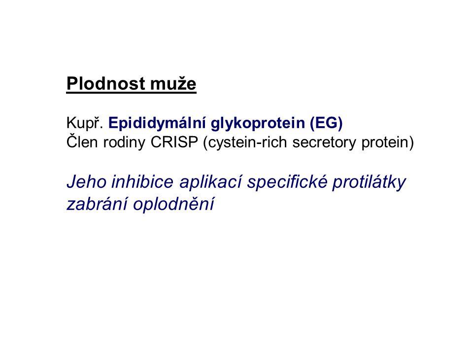 Plodnost muže Kupř. Epididymální glykoprotein (EG) Člen rodiny CRISP (cystein-rich secretory protein) Jeho inhibice aplikací specifické protilátky zab