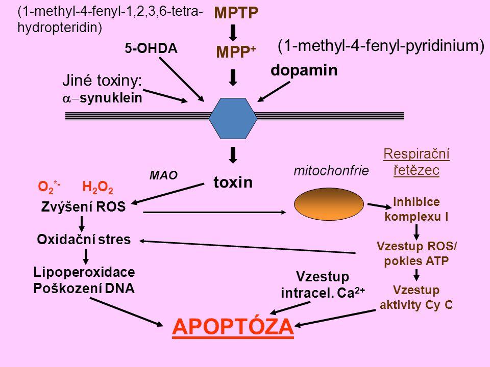 MPTP MPP + dopamin 5-OHDA Jiné toxiny:  synuklein (1-methyl-4-fenyl-1,2,3,6-tetra- hydropteridin) (1-methyl-4-fenyl-pyridinium) toxin Respirační řet