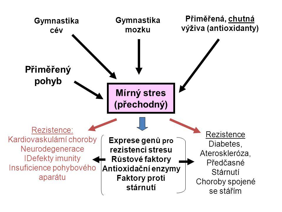Mírný stres (přechodný) Gymnastika cév Gymnastika mozku Přiměřená, chutná výživa (antioxidanty) Přiměřený pohyb Exprese genů pro rezistenci stresu Růs