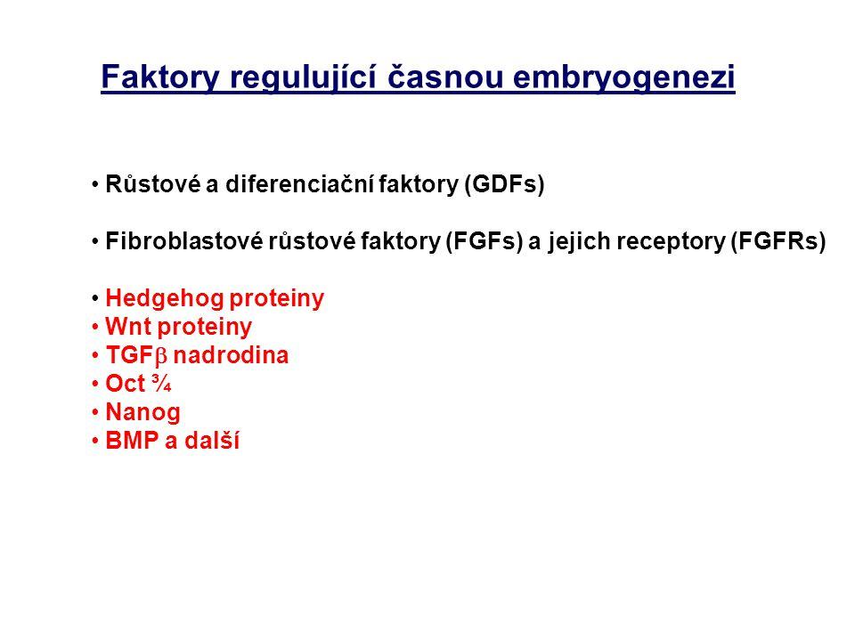 Faktory regulující časnou embryogenezi Růstové a diferenciační faktory (GDFs) Fibroblastové růstové faktory (FGFs) a jejich receptory (FGFRs) Hedgehog