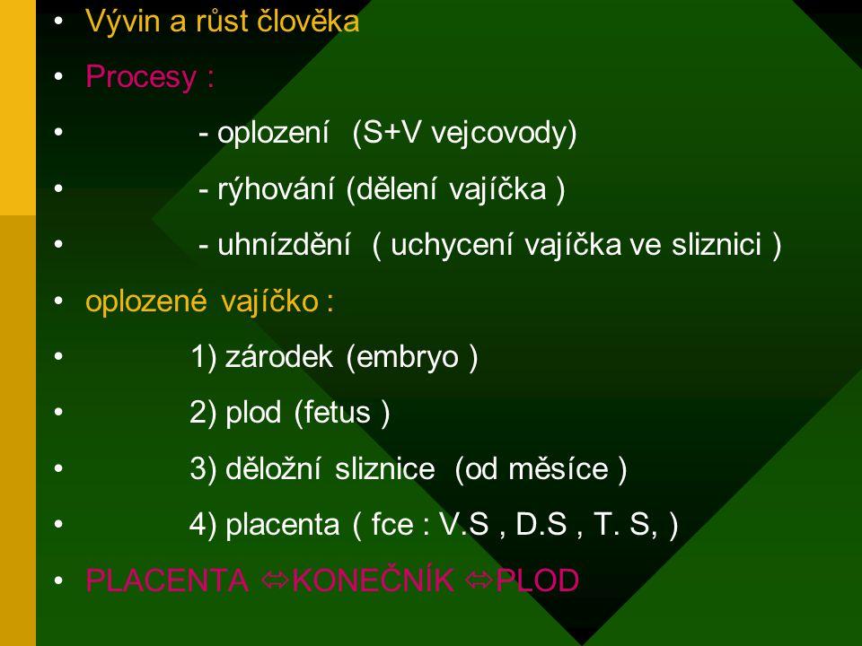 Vývin a růst člověka Procesy : - oplození (S+V vejcovody) - rýhování (dělení vajíčka ) - uhnízdění ( uchycení vajíčka ve sliznici ) oplozené vajíčko : 1) zárodek (embryo ) 2) plod (fetus ) 3) děložní sliznice (od měsíce ) 4) placenta ( fce : V.S, D.S, T.