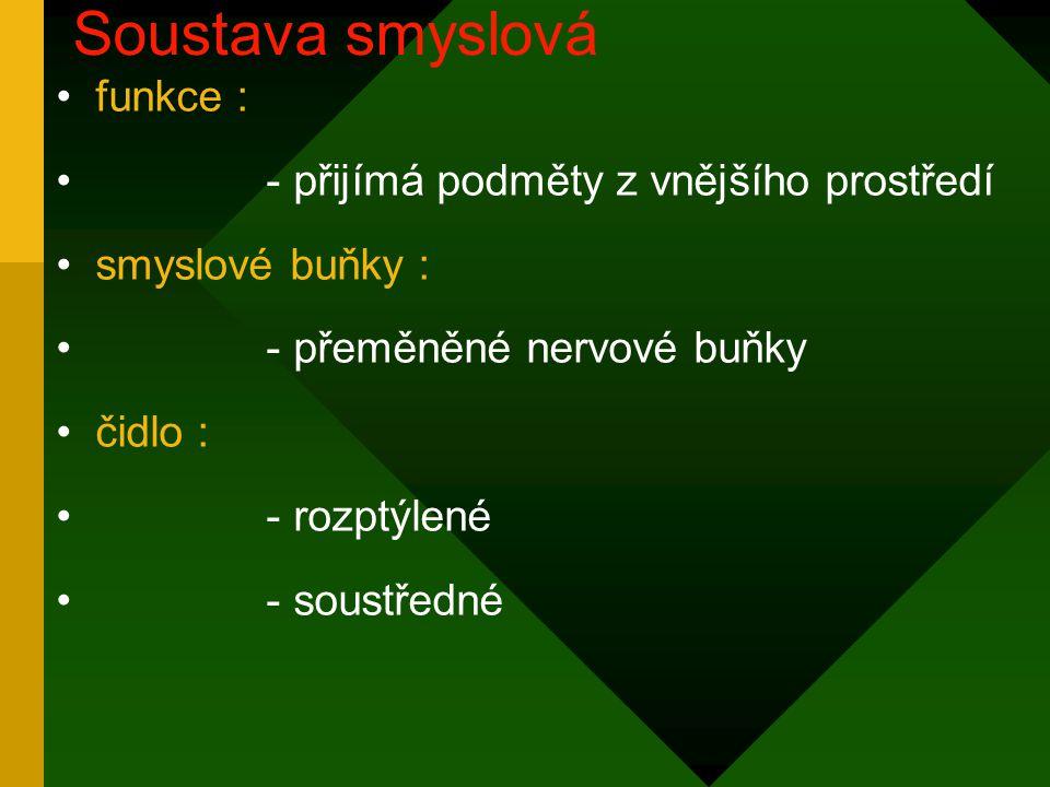 funkce : - přijímá podměty z vnějšího prostředí smyslové buňky : - přeměněné nervové buňky čidlo : - rozptýlené - soustředné