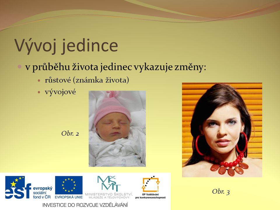 Prenatální období oplození vajíčka (zygota) – vznik nového života embryo (2.